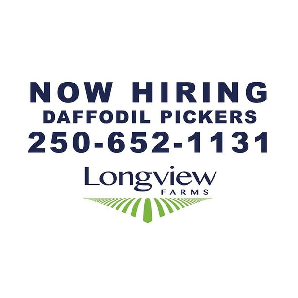 Daffodil Pickers Needed