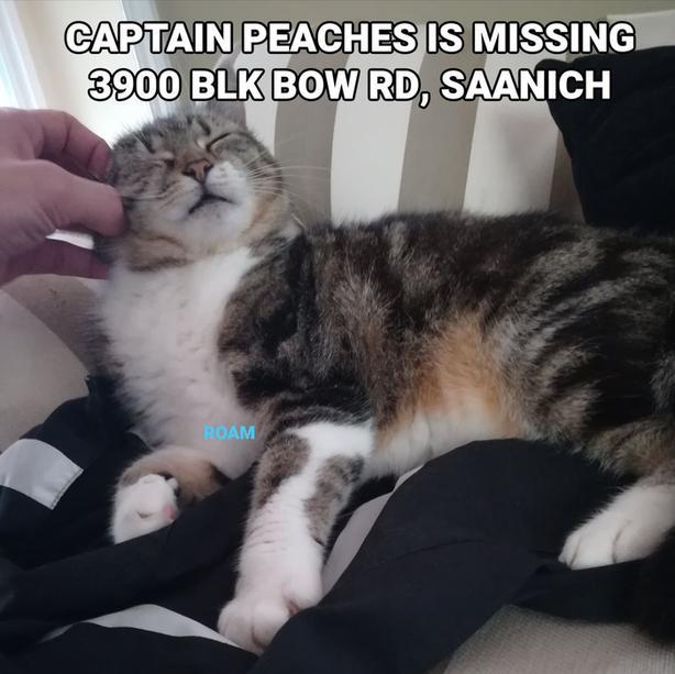 ROAM ALERT ~ LOST CAT 'CAPTAIN PEACHES'
