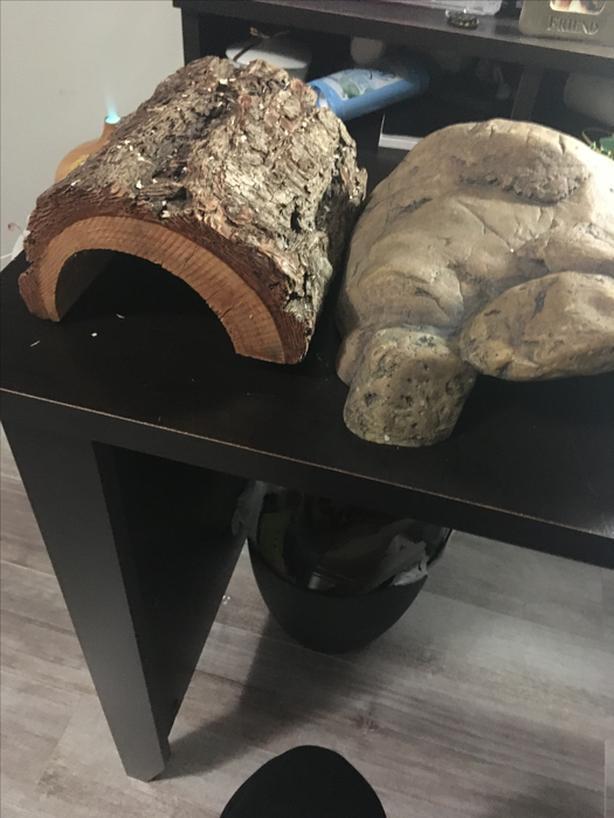 Ball python Complete Setup PRICE NEGOTIABLE