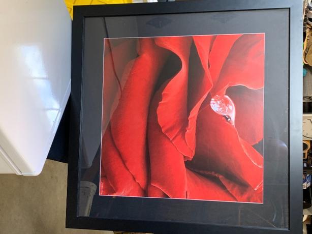 Framed Rose Print