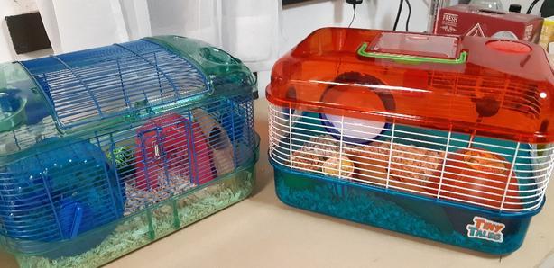 2 furry Companions
