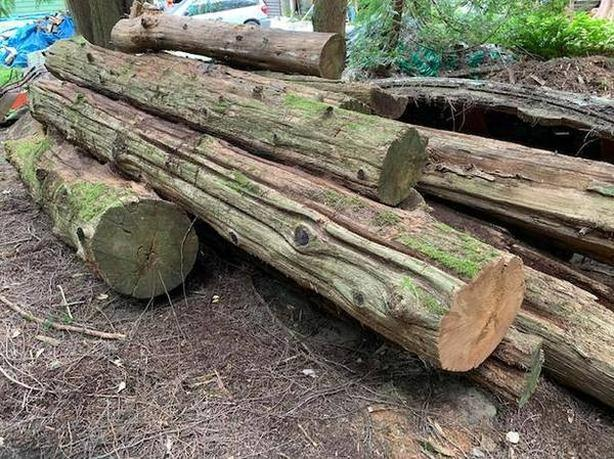 CEDAR LOGS FOR A DOCK / WHARF OR MILLING