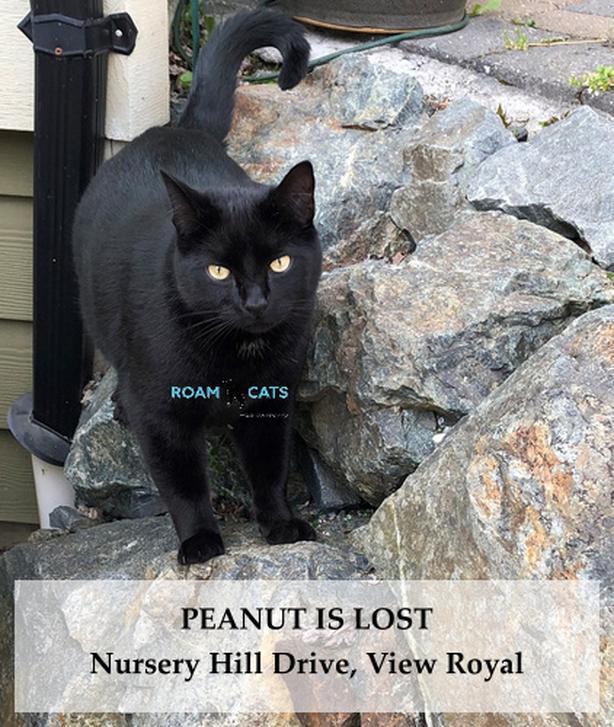 ROAM ALERT - Lot Cat: PEANUT - Nursery Hill Drive, View Royal