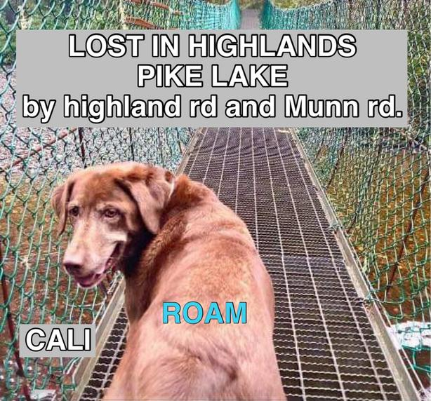 CALI IS LOST IN HIGHLANDS