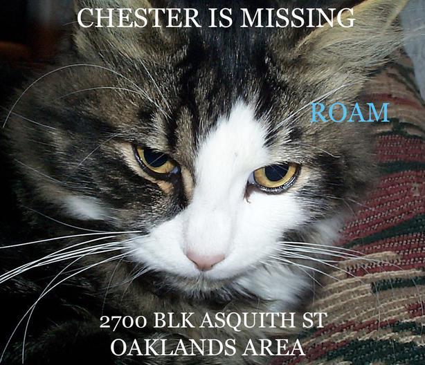 ROAM ALERT ~ LOST CAT 'CHESTER'