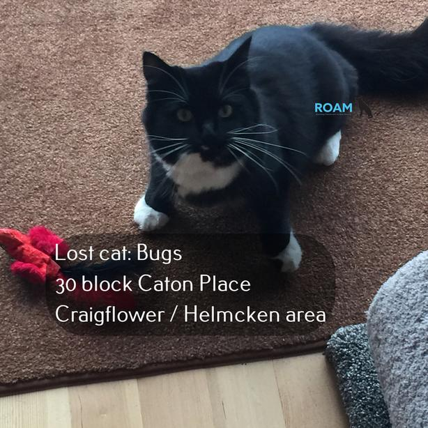 ROAM ALERT: Lost cat: Bugs