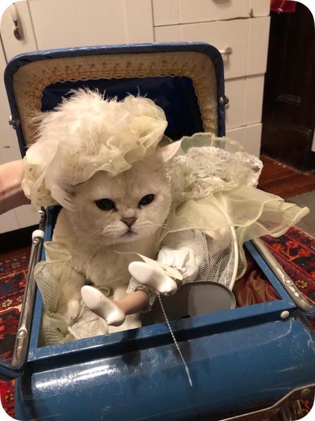 White Cat Gone Missing