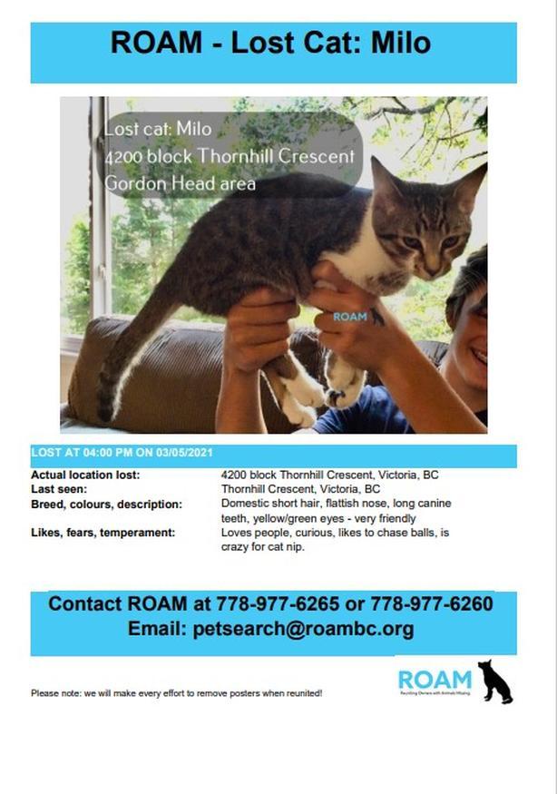 ROAM ALERT - LOST CAT: Milo
