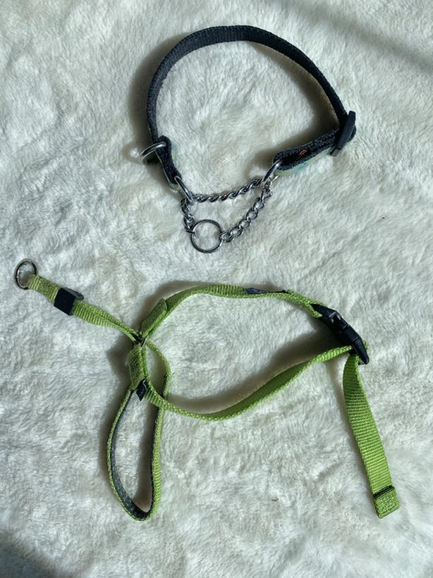 small martingale dog collar and head collar