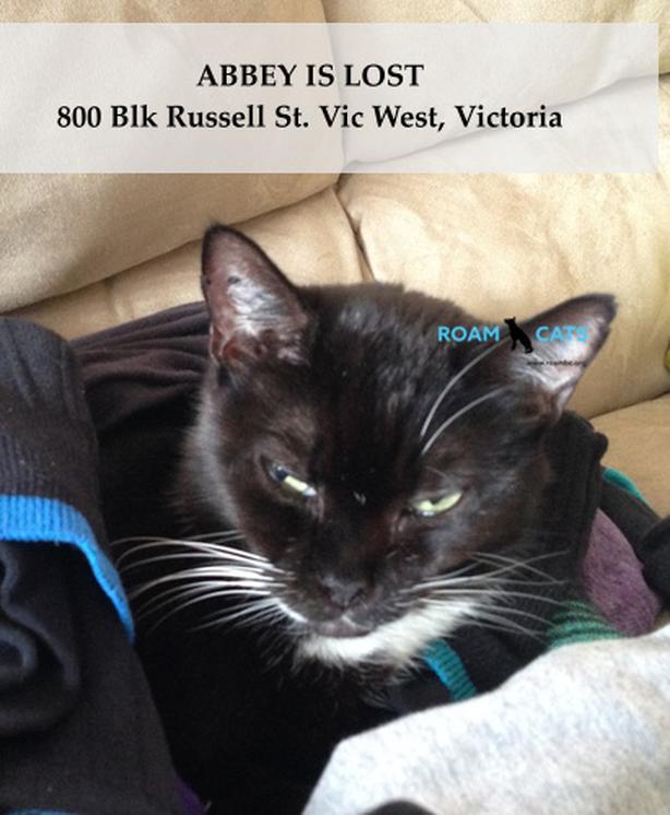 ROAM Alert - ABBEY IS LOST - Russell St, Vic West
