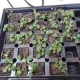 FREE: Flower plant seedlings