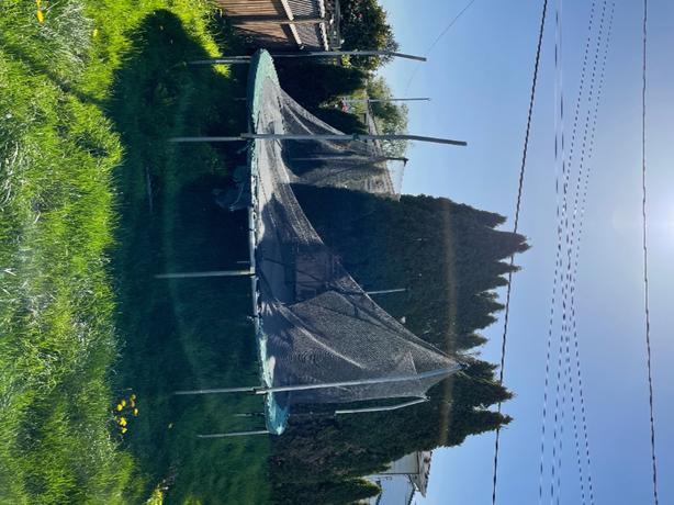 FREE: trampoline