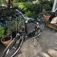 Giant Liv 24 speed bicycle