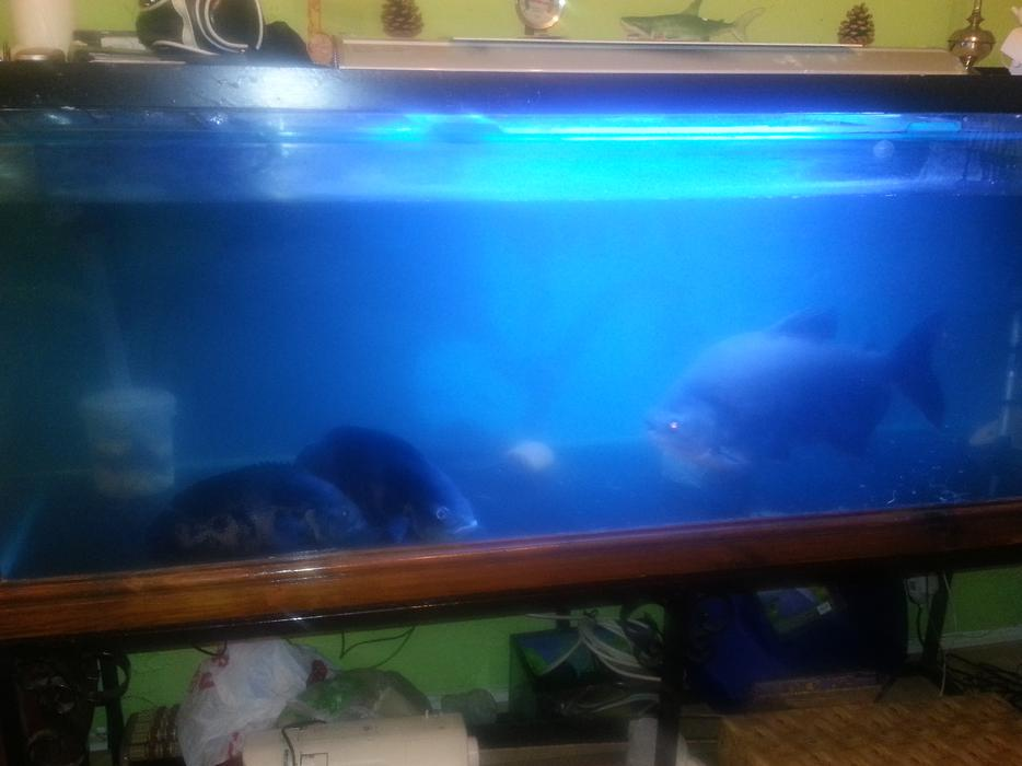 6ft fish tank for sale wolverhampton dudley for Amazon fish tanks for sale