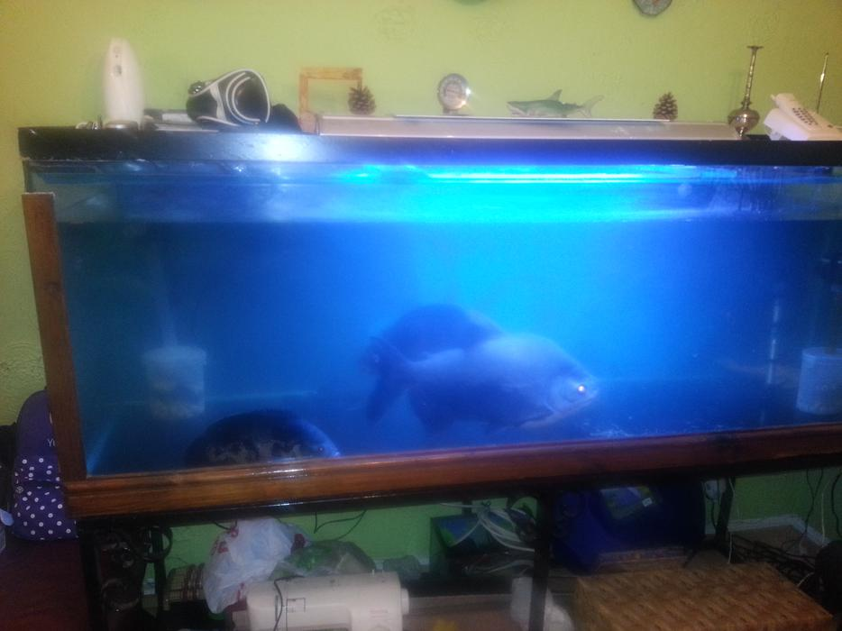 6ft fish tank for sale wolverhampton sandwell for Used fish tanks for sale