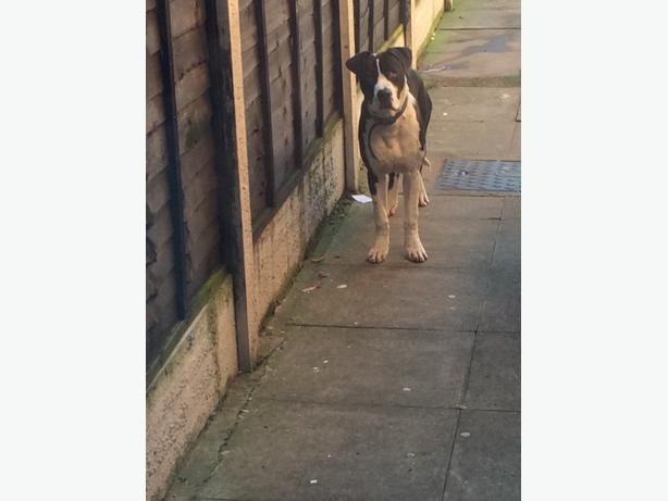  Log In needed £330 · bully kutta x for sale