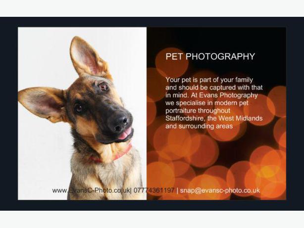 Pet Photography Modern Portraiture