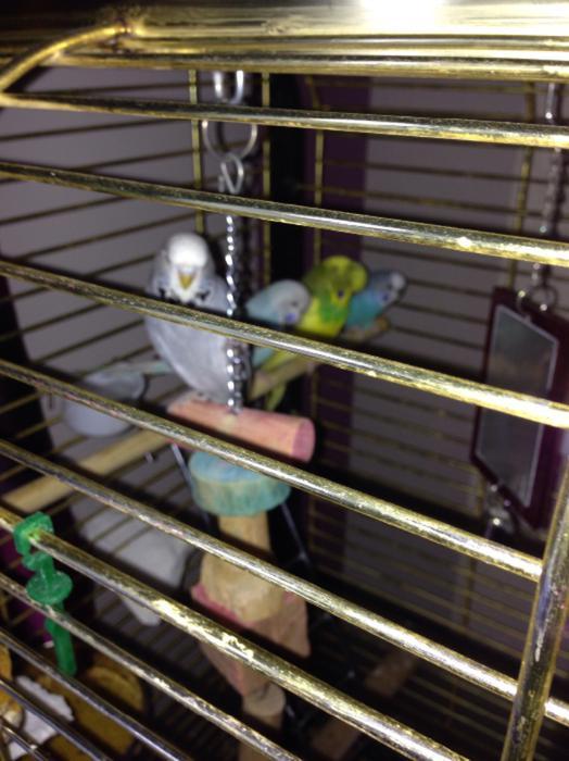 parrot v5 10c user manual