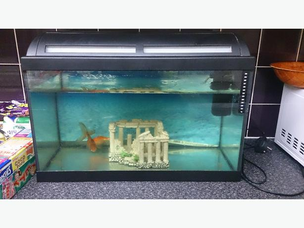 2 foot fish tank full set up west bromwich sandwell for How to set up a fish tank filter