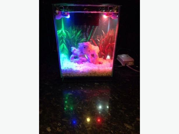 Fluval chi fish tank outside black country region dudley for Fish tank filter not working