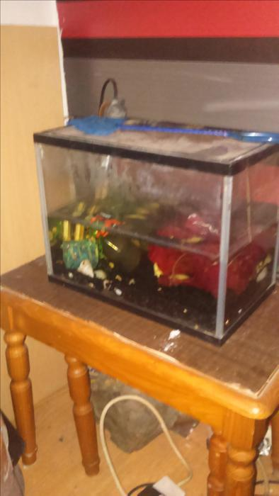 Small fish tank with everything for sale or swap outside for Small fish tanks for sale