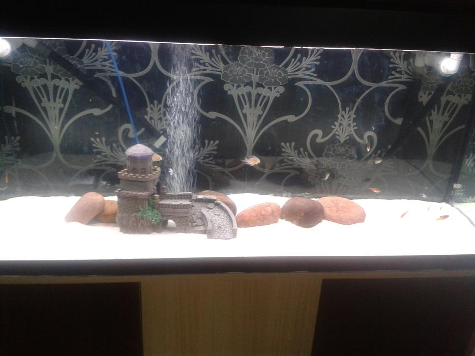 4ft fish tank for sale sandwell dudley for Used fish tanks for sale