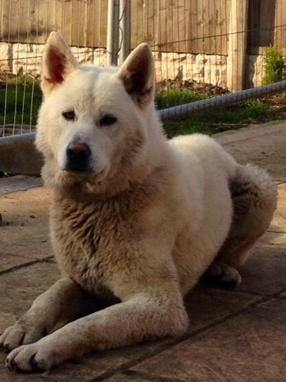 Dog Free To Good Home Sandwell