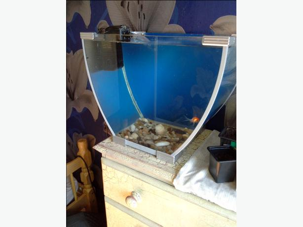 Need gone today fish tank setup walsall wolverhampton for What do i need for a fish tank