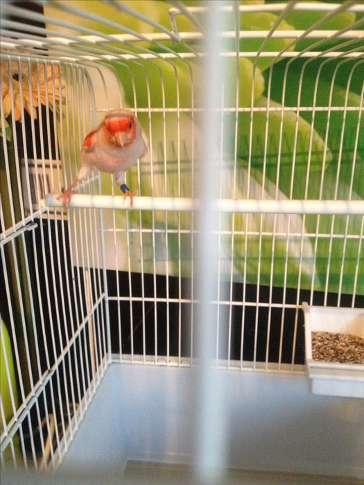 cock cage mötesplatsen mobil log in