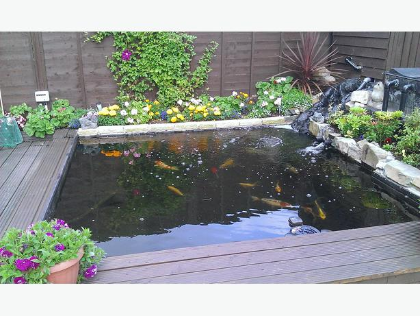 Wanted pond fish free if pos rowley regis dudley for Pond fish wanted