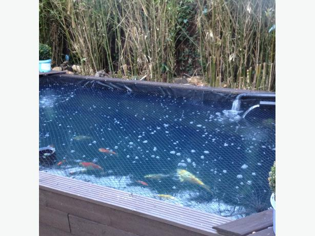 Wanted Pond Fish Preferably Free For Rehoming Wolverhampton Wolverhampton