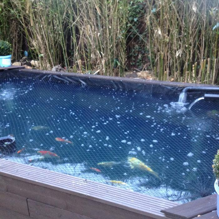 Wanted pond fish preferably free for rehoming for Pond fish wanted