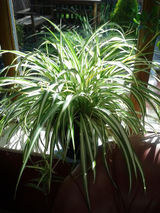 Large house plants bilston wolverhampton Large house plants