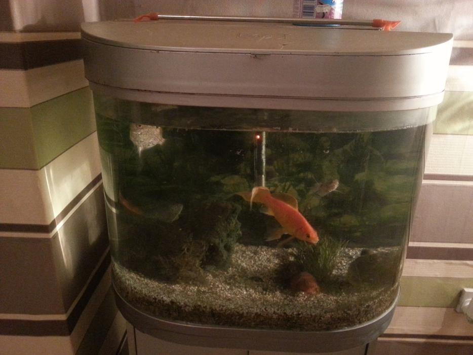 Fish tank and fish on stand heater and pump needs new for Fish tank with filter and heater
