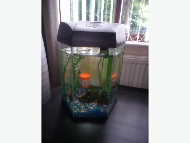 Small tank sandwell dudley for Fish tank with built in filter