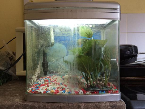 Betta fish tank aquarium dudley dudley for Aquariums for sale near me