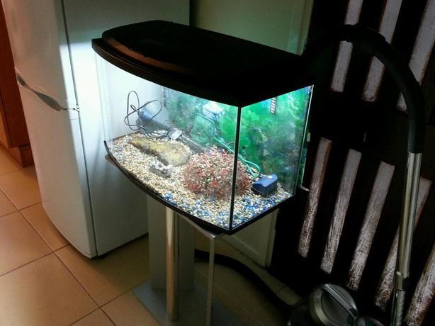 Fluval 95l bow front fish tank full setup wolverhampton for Bow front fish tank