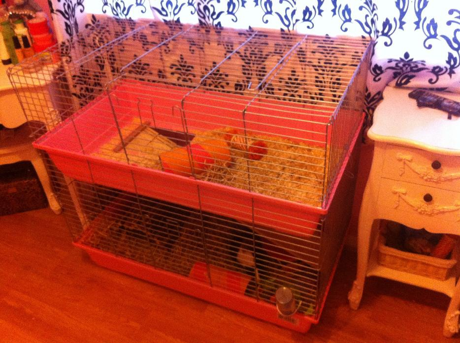 Guinea pig cage brierley hill dudley for Guinea pig dresser cage