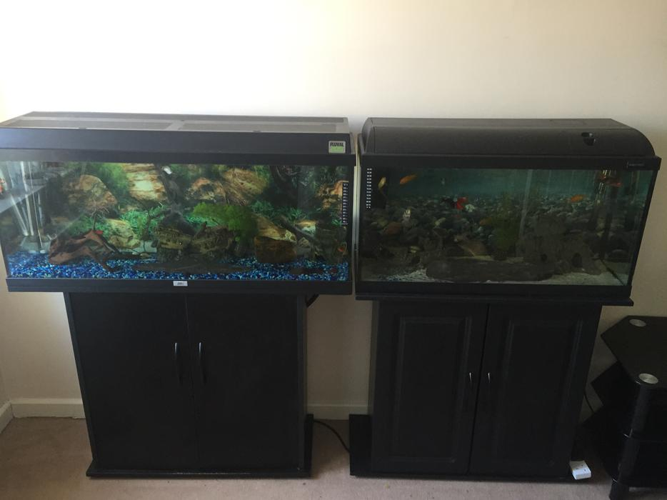 2 fish tanks full setups with fish darlaston dudley for Snap on fish tank