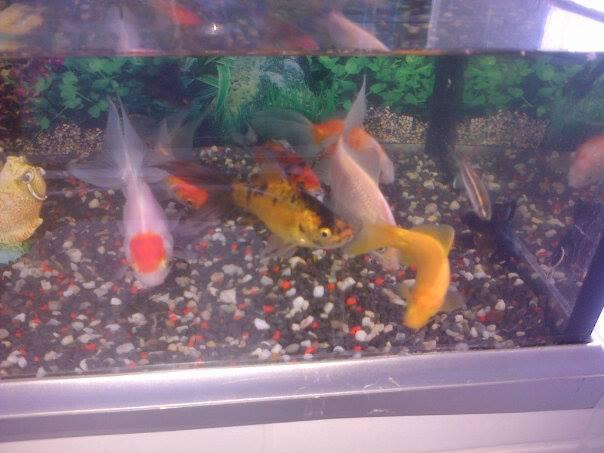 Small Fish Tank And 10 Gold Fish West Bromwich Sandwell