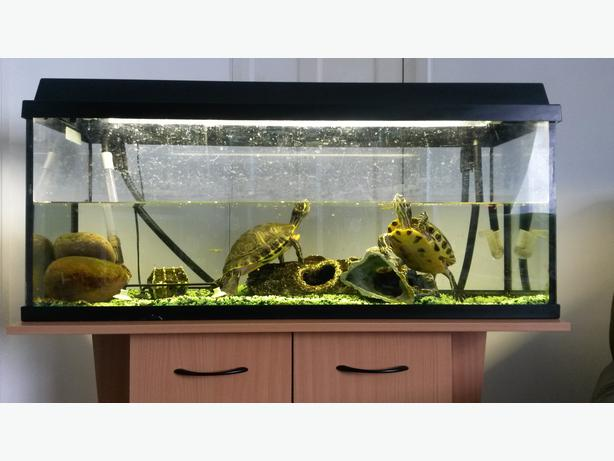 3 foot fish tank with stand and fluval filter 106 bloxwich for Fluval fish tank filter