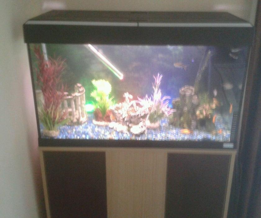Tropical fish tank fluval roma 125 with fish complete set for Travel fish tank