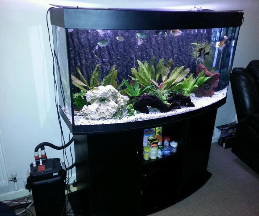 Juwel vision 260 4ft bow front fish tank with cabinet full for Bow front fish tank