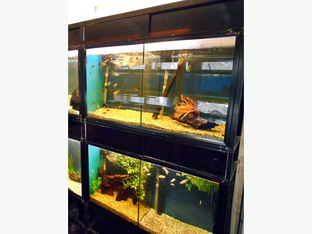 Aquariums double complete with stand bloxwich dudley for Amazon fish tanks for sale