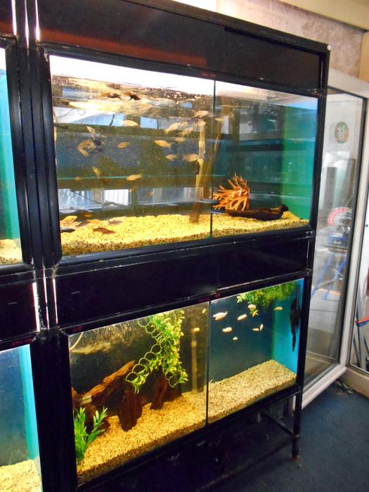 Aquariums double complete with stand bloxwich dudley for Double fish tank stand