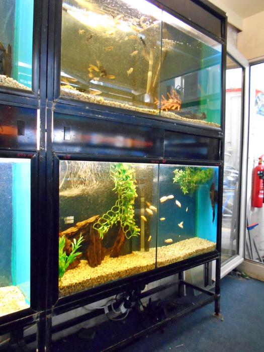 Aquariums Double Complete With Stand Bloxwich Sandwell