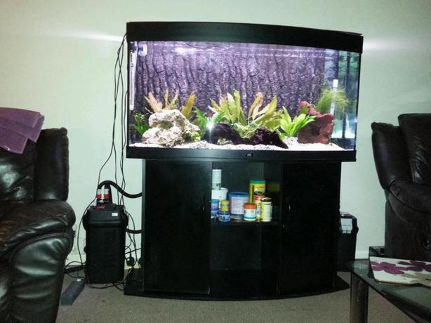 juwel vision 260 4ft bow front fish tank with cabinet full setup external filter wolverhampton. Black Bedroom Furniture Sets. Home Design Ideas