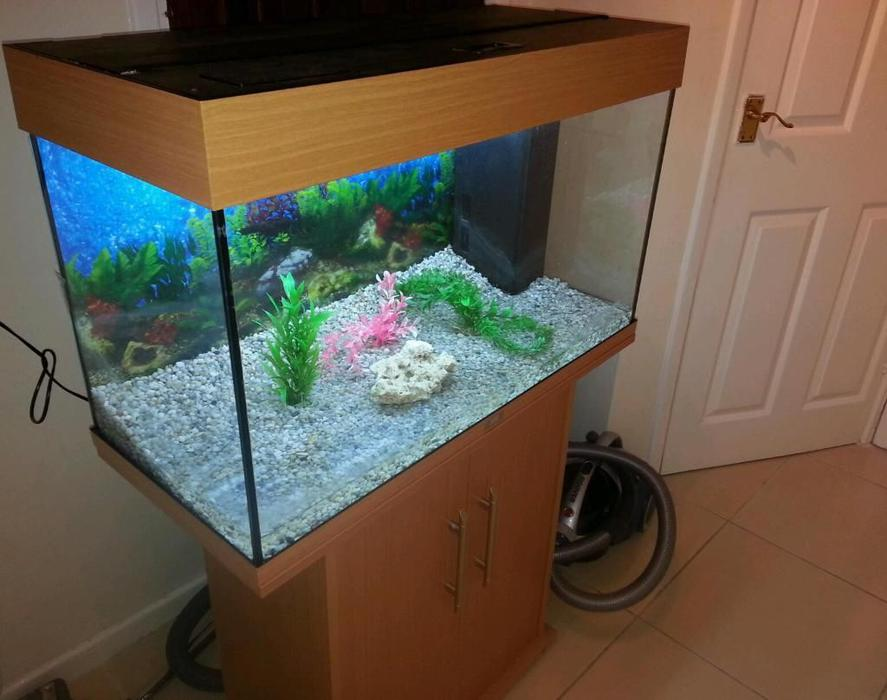 Juwel rio 125 3ft fish tank full setup with cabinet 2 for How to clean an old fish tank