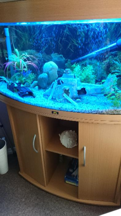 3ft fish tank willenhall walsall for Used fish tank