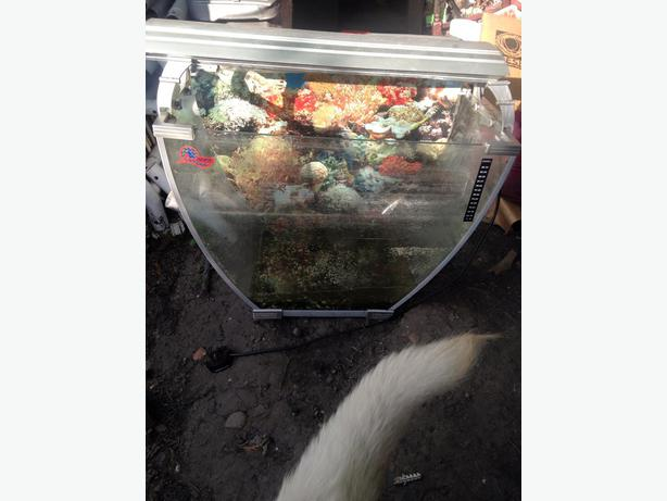 Unusual fish tank for sale darlaston wolverhampton for Outdoor fish tank for sale